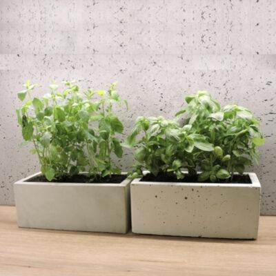 Na zdjęciu dwie donice betonowe z zielonymi roślinami. Ustawione na drewnianym blacie, z nimi ściana z betonu dekoracyjnego.