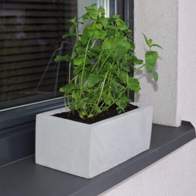 Na czarnym parapecie stoi donica z betonu z zieloną rośliną. Za nią widać okno i fragment elewacji.